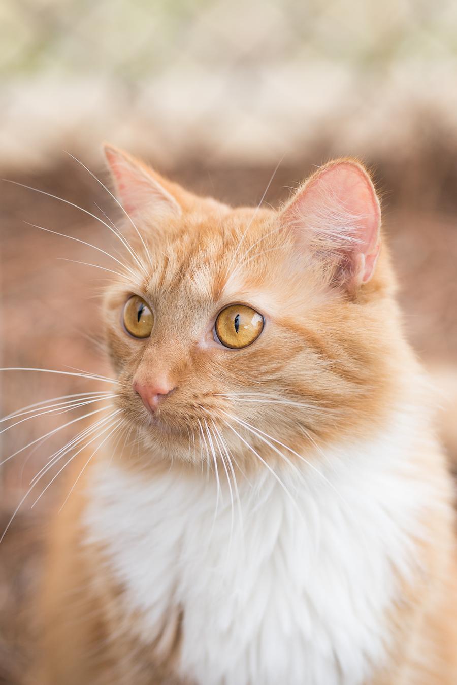 MHS Cat-Bailey 2-21-18