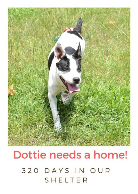 Dottie needs a home! (1)