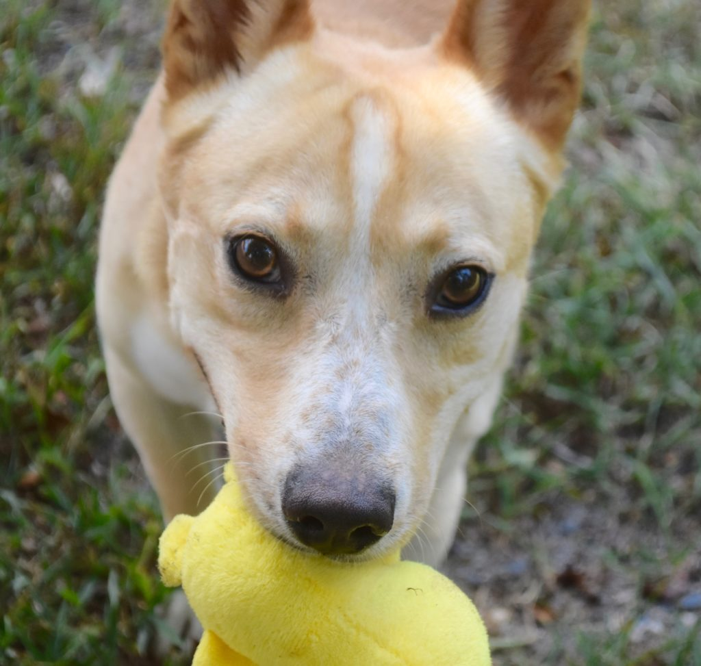 Adoptable Pets - Moore Humane Society
